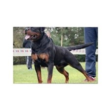 Cute Rottweiller Rectangle Magnet