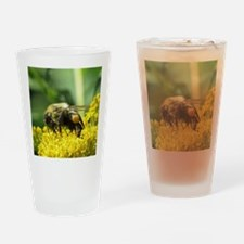 Bee with Pollen sacs Drinking Glass