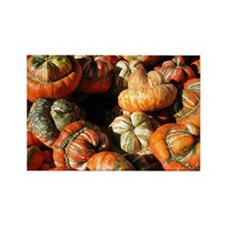 Fruit Stand: Turban Squash Rectangle Magnet
