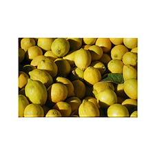 Fruit Stand: Lemons Rectangle Magnet