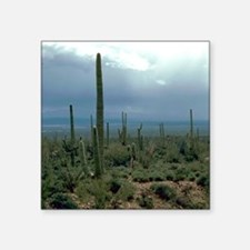 Arizona Desert and Cactuse Sticker
