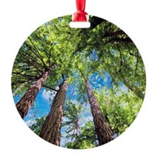 Muir Woods and the Very Blue Sky Ornament