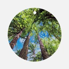Muir Woods and the Very Blue Sky Round Ornament