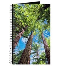 Muir Woods and the Very Blue Sky Journal