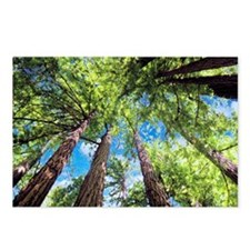 Muir Woods and the Very B Postcards (Package of 8)