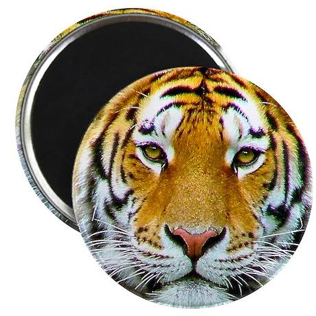 Tiger - Magnet