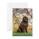 Spring / Newfoundland Greeting Cards (Pk of 20)