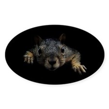 Cute Squirrel Decal