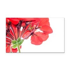 Red Geranium Rectangle Car Magnet