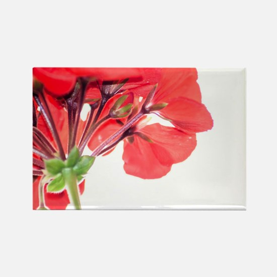 Red Geranium Magnets