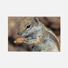 Squirrel Rectangle Magnet