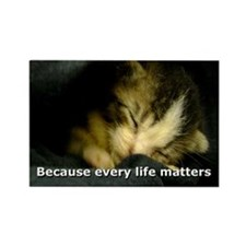 Funny Feral cats Rectangle Magnet (10 pack)