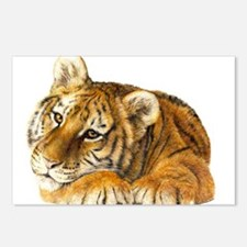 young tiger.jpg Postcards (Package of 8)