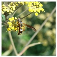Stinging Insect on Fennel Poster