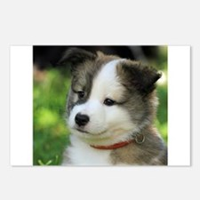 IcelandicSheepdog-Puppy F Postcards (Package of 8)
