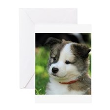 IcelandicSheepdog-Puppy Fengur Greeting Cards