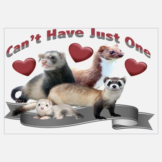 Can't have Just One Ferret