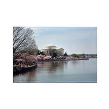 Cool Washington dc cherry blossom Rectangle Magnet (10 pack)