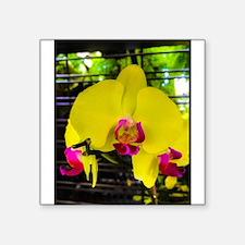 Paradise in yellow Sticker