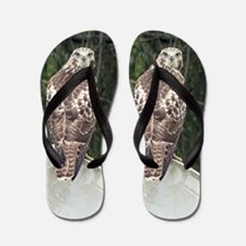Marsh (Harrier) Hawk Flip Flops