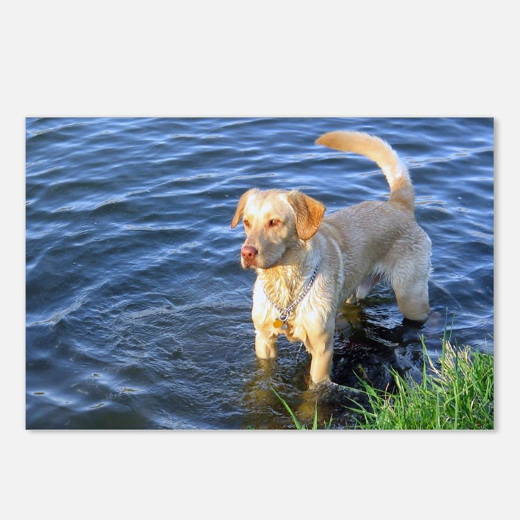 Yellow Lab Madison Postcards (Package of 8)