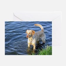 Yellow Lab Madison Greeting Cards (Pk of 10)