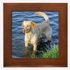 Yellow Lab Madison Framed Tile