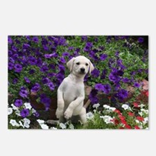 Yellow Lab Buddy Postcards (Package of 8)