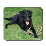 Dogs labradors Mouse Pads