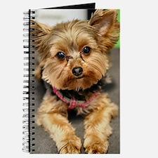Cute Yorkshire terrier Journal