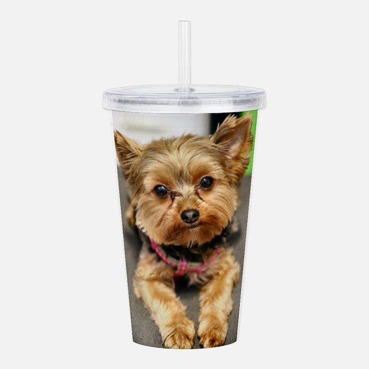 Cute Yorkshire terrier Acrylic Double-wall Tumbler