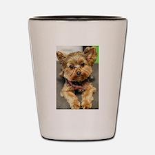 Unique Yorkshire terrier Shot Glass