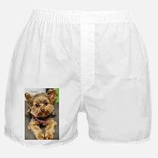 Cute Yorkshire terrier Boxer Shorts