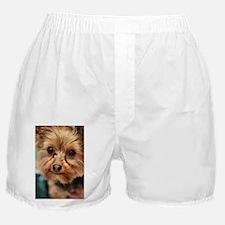Unique Yorkshire terrier Boxer Shorts