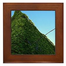 Cute Ivy Framed Tile