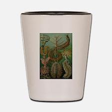 Vintage Segmented Worms, Chaetopoda Shot Glass