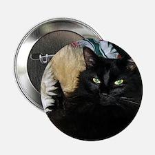 "Funny Grumpy cat 2.25"" Button"