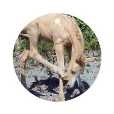 Palomino Foal Scratching Round Ornament