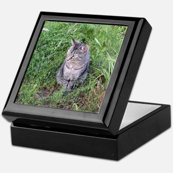 Cool Tigers Keepsake Box