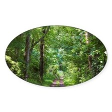 Forest Trail Decal