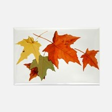 Autumn Colors Rectangle Magnet