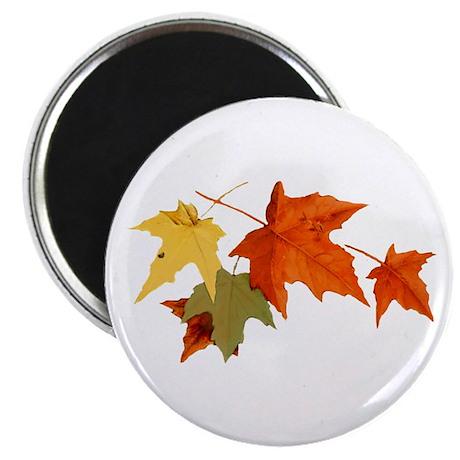 """Autumn Colors 2.25"""" Magnet (10 pack)"""