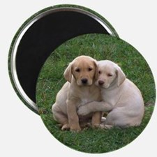 Yellow Lab Pups Magnet