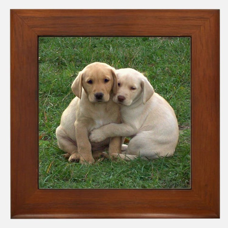 Yellow Lab Pups Framed Tile
