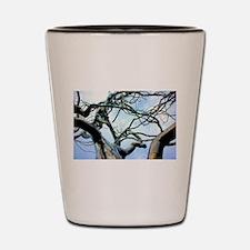 Lightning Tree Shot Glass