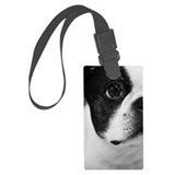Boston terrier Large
