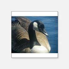 "Canadian Goose Square Sticker 3"" x 3"""