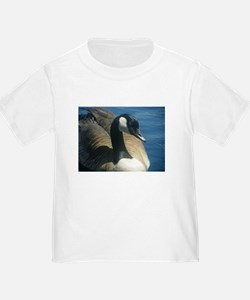 Canadian Goose T