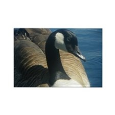 Canadian Goose Rectangle Magnet