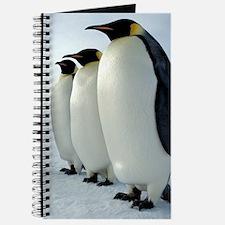 Lined up Emperor Penguins Journal